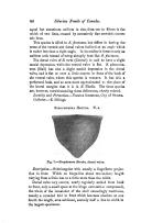 60 페이지