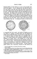 217 페이지